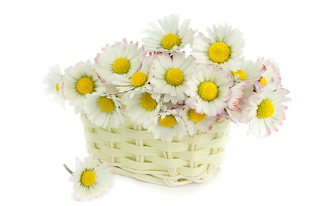 Daisies in a basket photo