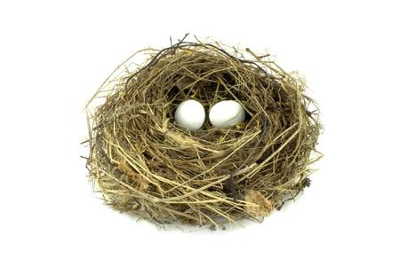 retirement nest egg: Bird nest and eggs on white background Stock Photo