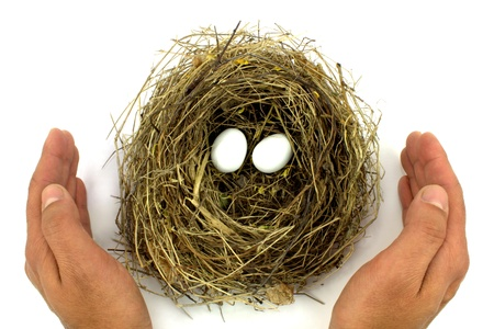 fertility: Bird nest, eggs and protective hands - Protect concept
