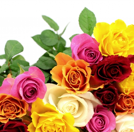 Colorful roses photo