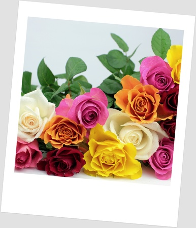 Colorful roses with polaroid photo look photo