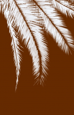 palm branch: White palm leaves on brown background Stock Photo