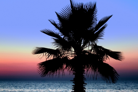 palm trees silhouette: Sunset and palm trees on the beach