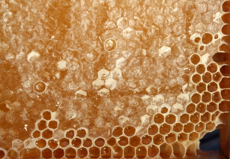Honeycomb - closeup photo
