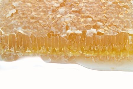 Honeycomb on white background photo