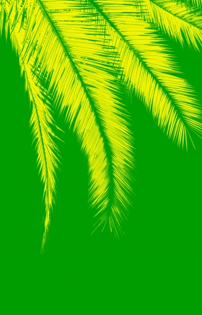 Yellow palm leaves on green background photo
