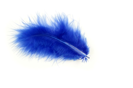 Blue feather on a white background Stock Photo