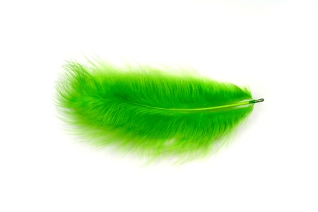 silken: Green feather on a white background