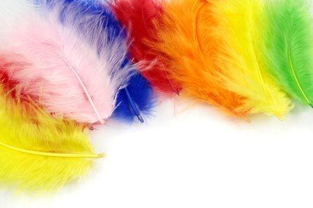 Colorful  feathers on a white background