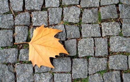 road paving: Pavimentaci�n de caminos piedras y hojas de casta�o Foto de archivo