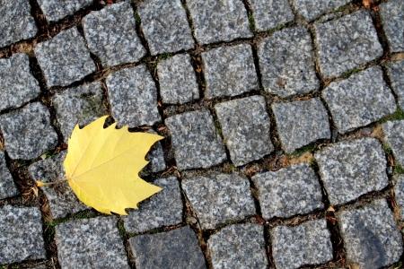 road paving: Road adoquines y el concepto hoja amarilla de oto�o