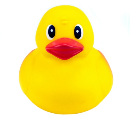 rubber duck: Yellow rubber duck on white   background  Stock Photo