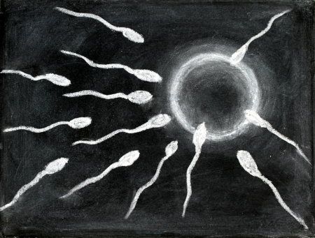sperm cell: Fertilization of sperm and egg drawing with chalk on blackboard