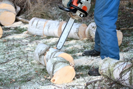 Tree cutting with chainsaw  photo