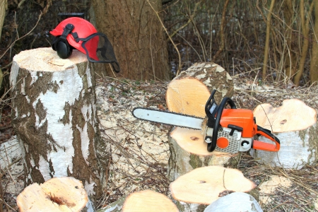 tree trimming: Chainsaw safety equipment and cutting tree in forest Stock Photo