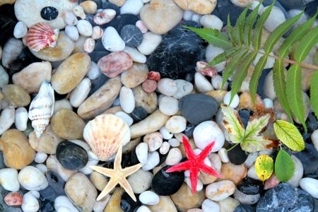fish spa: Seashell, starfish and pebbles close up image Stock Photo