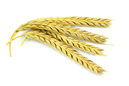 Wheat ears isolated on white background  photo