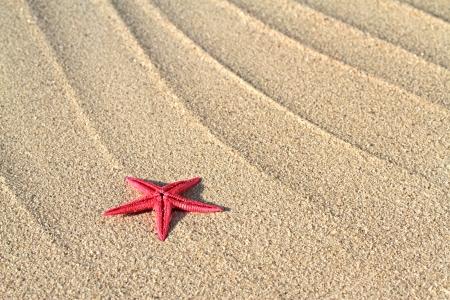 fish star: Estrellas de mar Foto de archivo