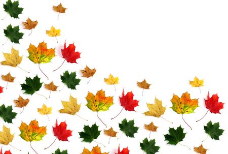 hojas de colores: Hojas de colores sobre fondo blanco