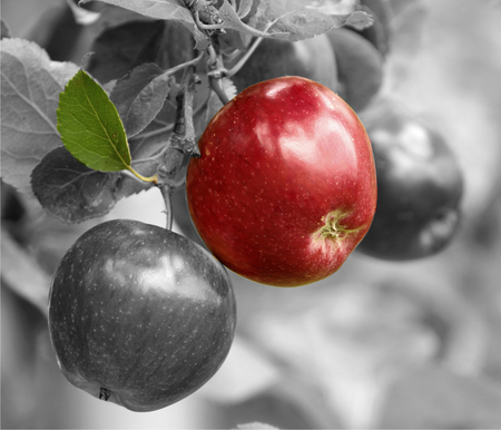 Red apples with color , black and white image