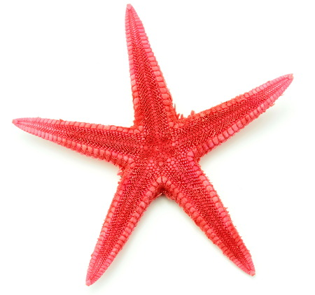 seastar: Red seastar, isolated on white background.