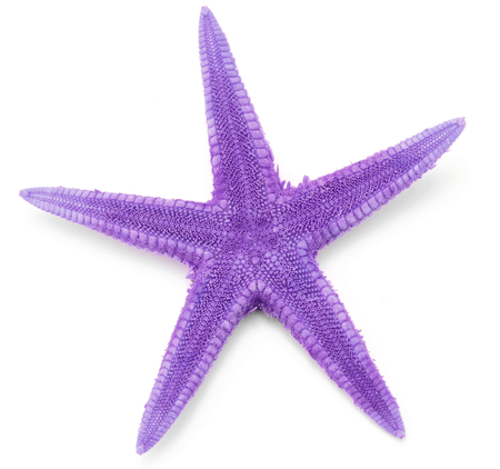 seastar: Purple seastar, isolated on white background. Stock Photo