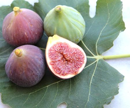 feuille de figuier: Figues délicieuses sur une feuille de vigne image rapprochée
