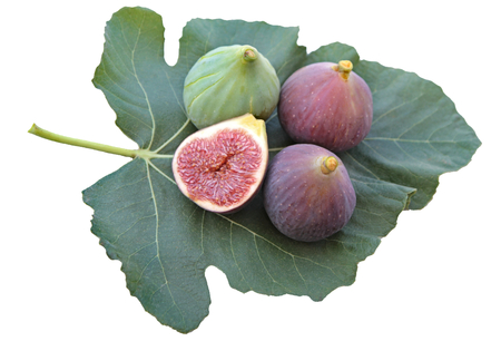 fig leaf: Delicious figs on a fig leaf. Isolated on white background.