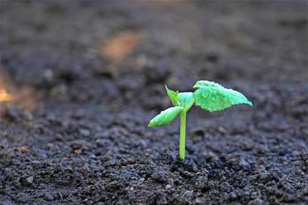 Growing sprout plant in the soil 写真素材