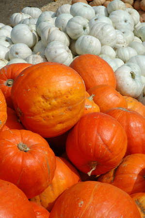 Orange and white pumpkins in a pile on a farm. Imagens