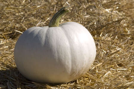 A small white pumpkin sitting on a bale of straw, morning light from the right side.