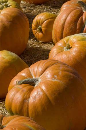 Vertical photo, large orange pumpkin at the bottom.  photo