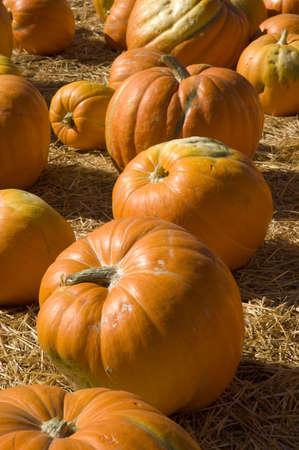 Vertical shot of three large orange pumpkins on straw. photo
