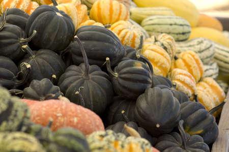 Piles of squash at the market, black acorns are in focus.