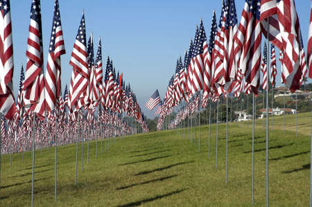 Thousands of US flags are arranged on a field of grass under a blue sky. Imagens