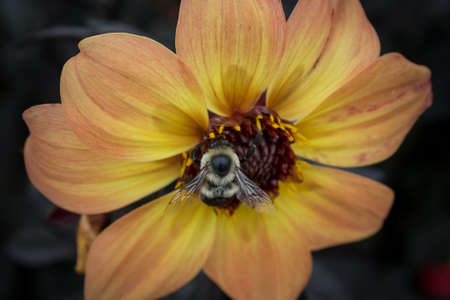 nectar: Nectar Robber