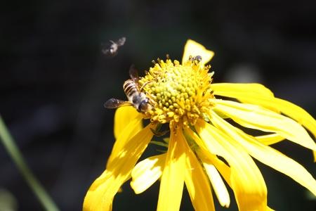 Bee on wild flower Фото со стока