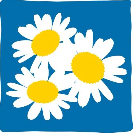 chamomile tea: daisy, chamomile, white daisy, blue daisy, daisy pattern, daisy icon