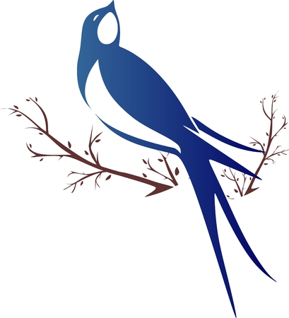swallows, swift bird on tree branch