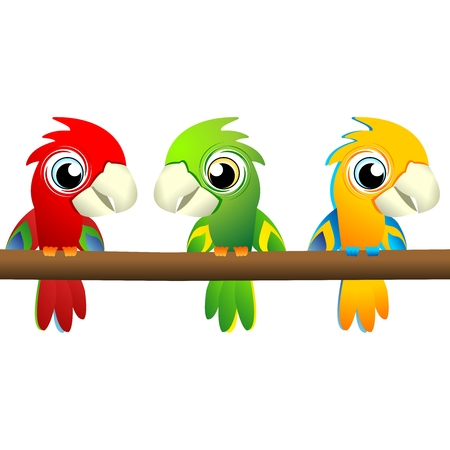 parakeet: Vector Cute Cartoon Macaw in three different colors Illustration