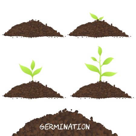 plant growing: Vector Plant Growing by Stage, in four stages