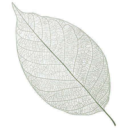 Vector Leaf Veins Closeup Pattern Background, simple realistic portrait Illustration