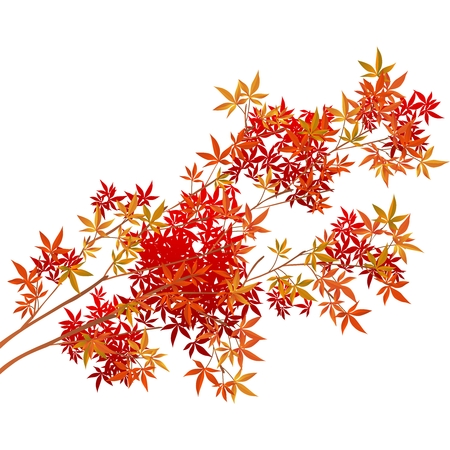Vector Autumn Tree Illustration isolated on white background