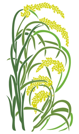 oat: Vector Paddy Grass Closeup Illustration, rice, wheat, barley, oat, buckwheat, rye