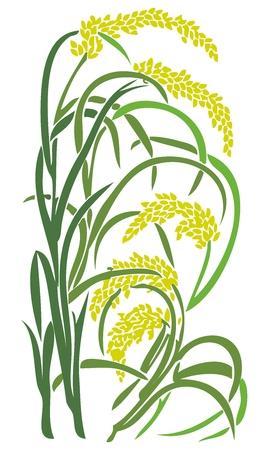 Vector Paddy Grass Closeup Illustration, rice, wheat, barley, oat, buckwheat, rye