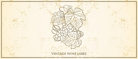 cabernet: Vector Vintage Wine Bottle Label Template, with classic grapevine illustration