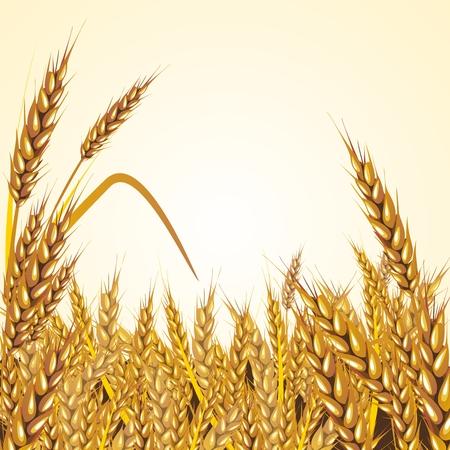 Vector Paddy Grass Closeup Illustration, mature and ready for harvesting