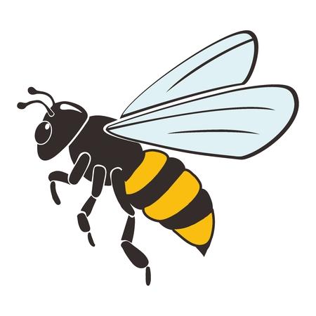 Honey Bee Illustration isolated on white background