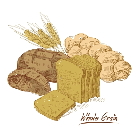 grain fields: Vector Bread and Grain Presentation Illustration, isolated on white background Illustration
