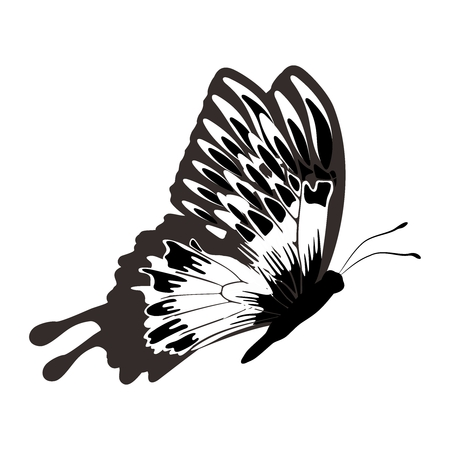 exoskeleton: Vector Monochrome Butterfly Outline Silhouette Illustration isolated on white background